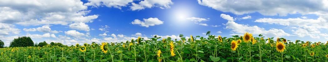 Kits solares irrigação e bombas - Damia Solar