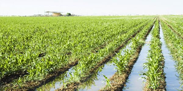 El riego de campos de cultivo mediante bombas de agua solares