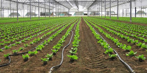 Aproveite o sol do verão para rega fotovoltaica de campos agrícolas