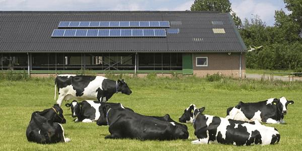 Uso de painéis solares para electricidade em quinta de gado